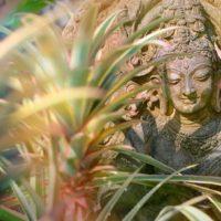 Yoga e parola poetica: incontro tra linguaggio poetico ed espressione del corpo